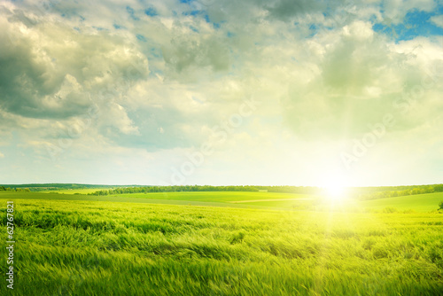 Spoed Foto op Canvas Weide, Moeras green field and sunrise