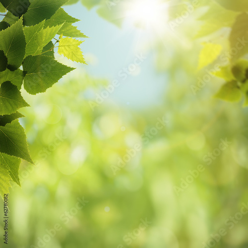 Staande foto Lente Green Nature, abstract environmental backgrounds for your design