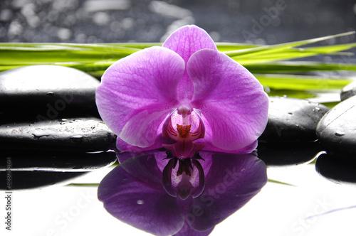 rozowa-orchidea-z-zen-kamieniami-i-zielen-liscmi-na-czarnym-tle