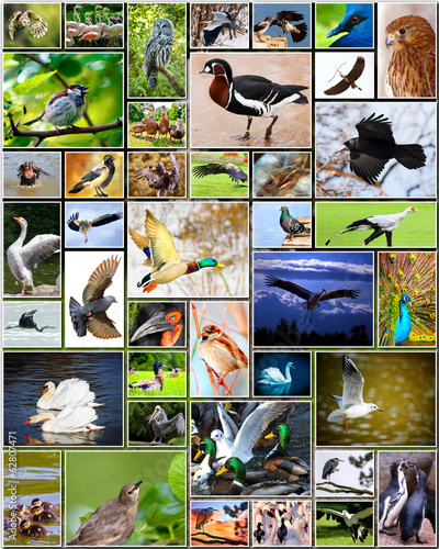 Cadres-photo bureau Graffiti collage Collage of birds
