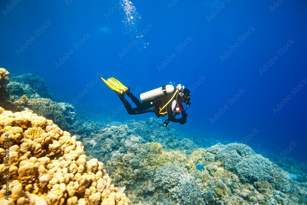 Fototapeta Scuba diver swimming under water and examines the seabed