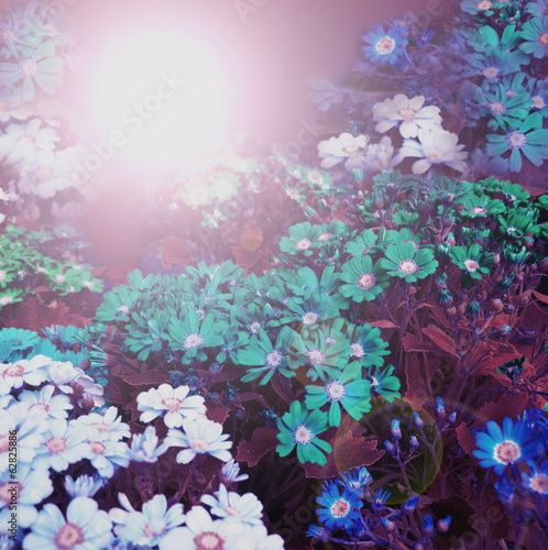 Fototapety, obrazy: flowers  background
