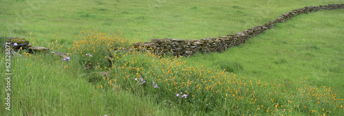 Meadow with stone wall and wildflowers. - 62828871