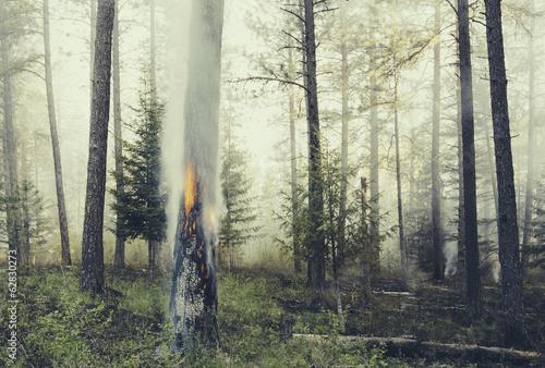 kontrolowane-spalanie-lasow-celowy-ogien-by-stworzyc-zdrowszy-i-bardziej-zrownowazony