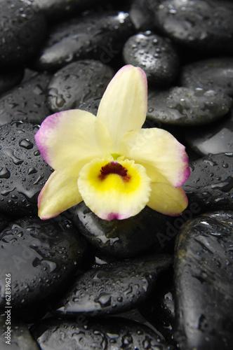 czarne-kamienie-i-rozowa-orchidea