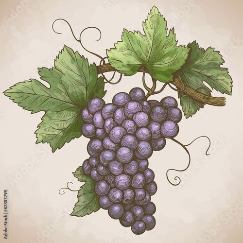 Photo  engraving grapes on the branch in retro style