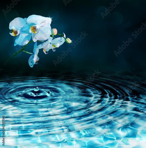 kropla w wodzie z orchideą, w ciemności