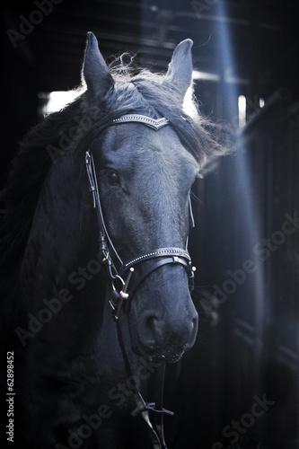 Photo  friesian horse stallion