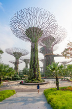 Supertree At Gardens By The Bay