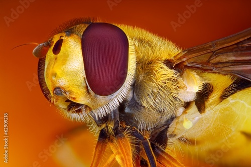 Türaufkleber Makrofotografie Extreme sharp and detailed view of Hoverfly