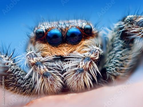 Photo sur Toile Croquis dessinés à la main des animaux Closeup of Marpissa muscosa jumping spider head