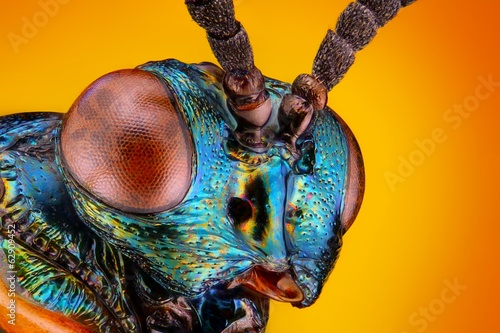 Türaufkleber Makrofotografie Extreme sharp and detailed view of small metallic wasp