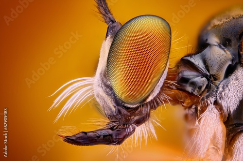 Spoed Foto op Canvas Macrofotografie Extreme sharp and detailed view of Robber fly head