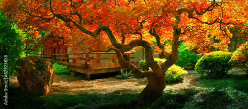 Spoed Foto op Canvas Bonsai Fall Tree