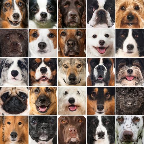 Hundeschnauzen - Collage - 62965053