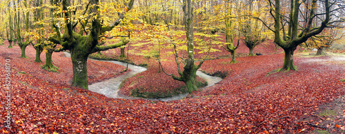 panorama of forest in autumn