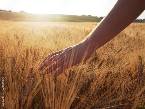Hand slide threw the wheat field