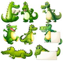 Eight Scary Crocodiles