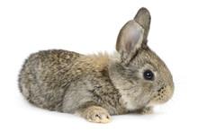 Rabbit Isolated On White Backg...
