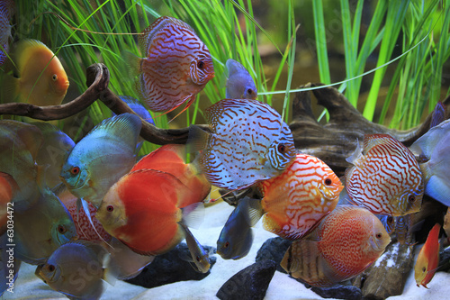 Papiers peints Recifs coralliens colored discus