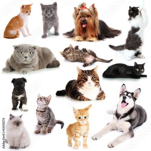 kolaz-koty-i-psy-odizolowywajacy-na-bielu