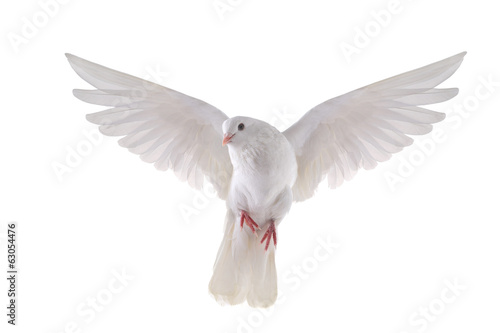 Foto op Aluminium Vogel flying dove