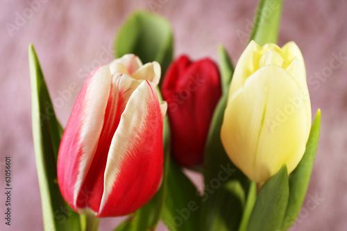 czerwone-i-zolte-tulipany-na-rozowym-tle