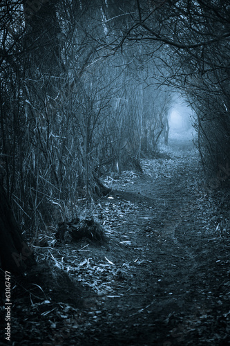 Dark spooky passage through the forest #63067477