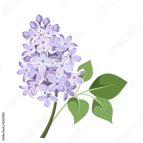 Obraz na plátně Branch of lilac flowers. Vector illustration.