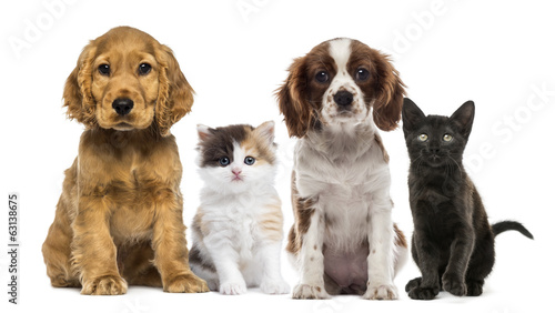 Group of kittens and dogs #63138675