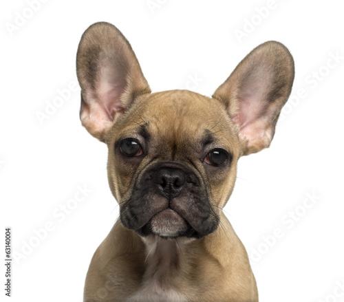 Deurstickers Franse bulldog Close-up of a French Bulldog puppy looking at the camera