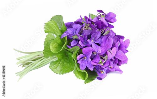 Leinwand Poster bouquet de violettes