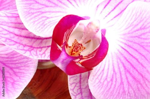Particolare di fiore di orchidea