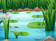 A Pond With Green Plants