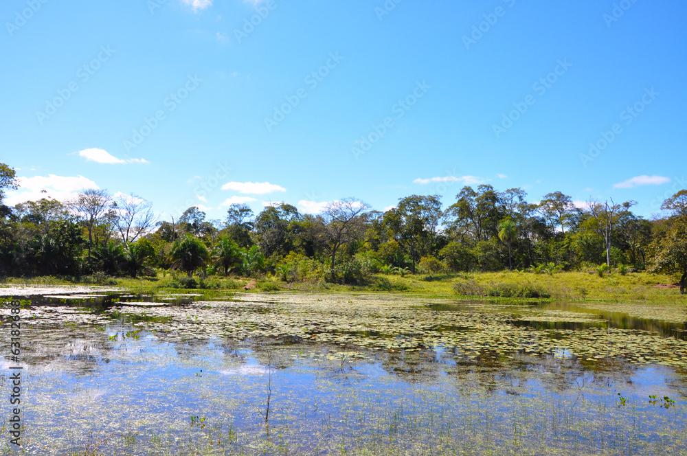 Fotografija  Flooded forest, Pantanal, Mato Grosso (Brazil)
