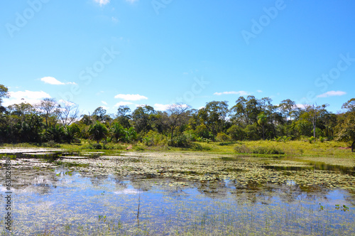 Flooded forest, Pantanal, Mato Grosso (Brazil) Tablou Canvas