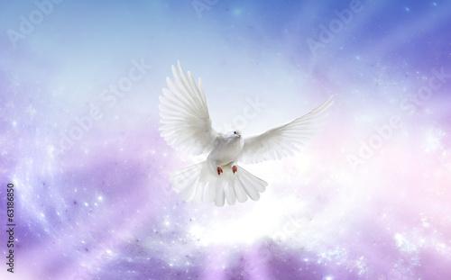 Obraz na plátne Holy Spirit Dove