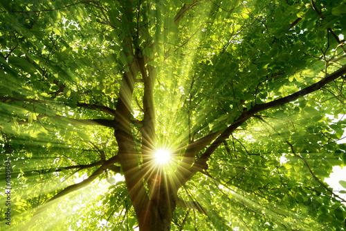 Photo  Sonne strahlt explosiv durch den Baum