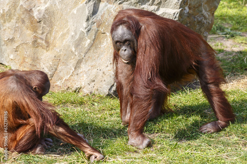 Photo Stands Parrot Orang oetan
