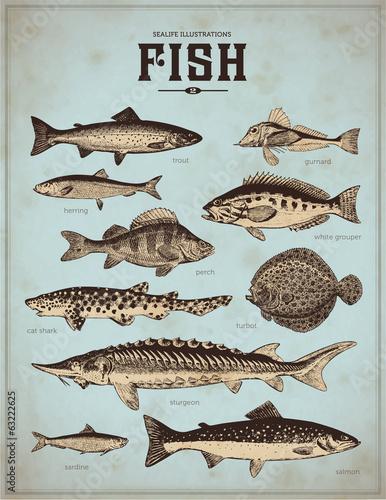 Fotografía  sealife illustrations: fish (2)