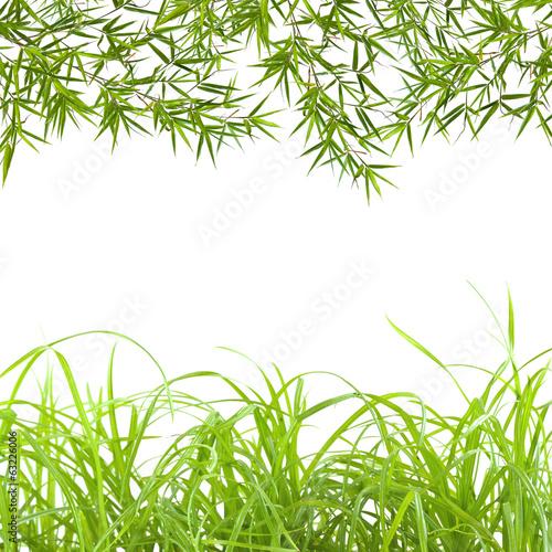 granica-trawy-i-bambusa