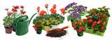 Fototapeta Kwiaty - Seasonal flowers composition