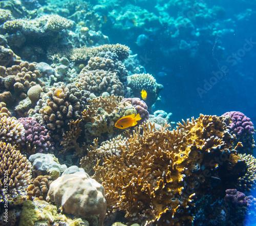 Tuinposter Koraalriffen Coral fish