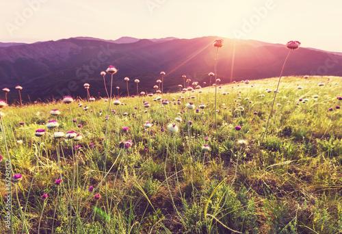 Staande foto Meloen Sunny meadow