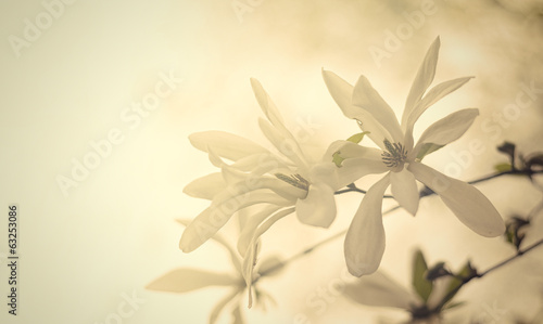 Fototapety, obrazy: Vintage flowers