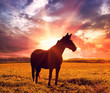 canvas print picture - landscape with horse in sunrise
