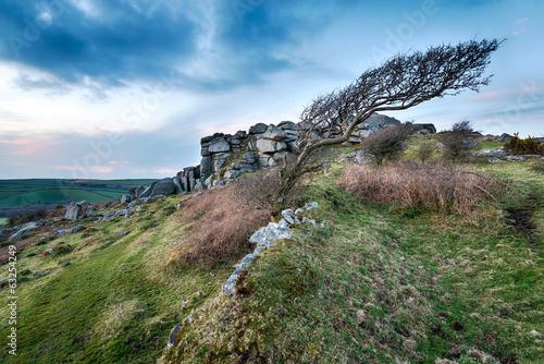 Fotografia, Obraz  Windswept Moors