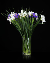 Beautiful Irises On Black Background