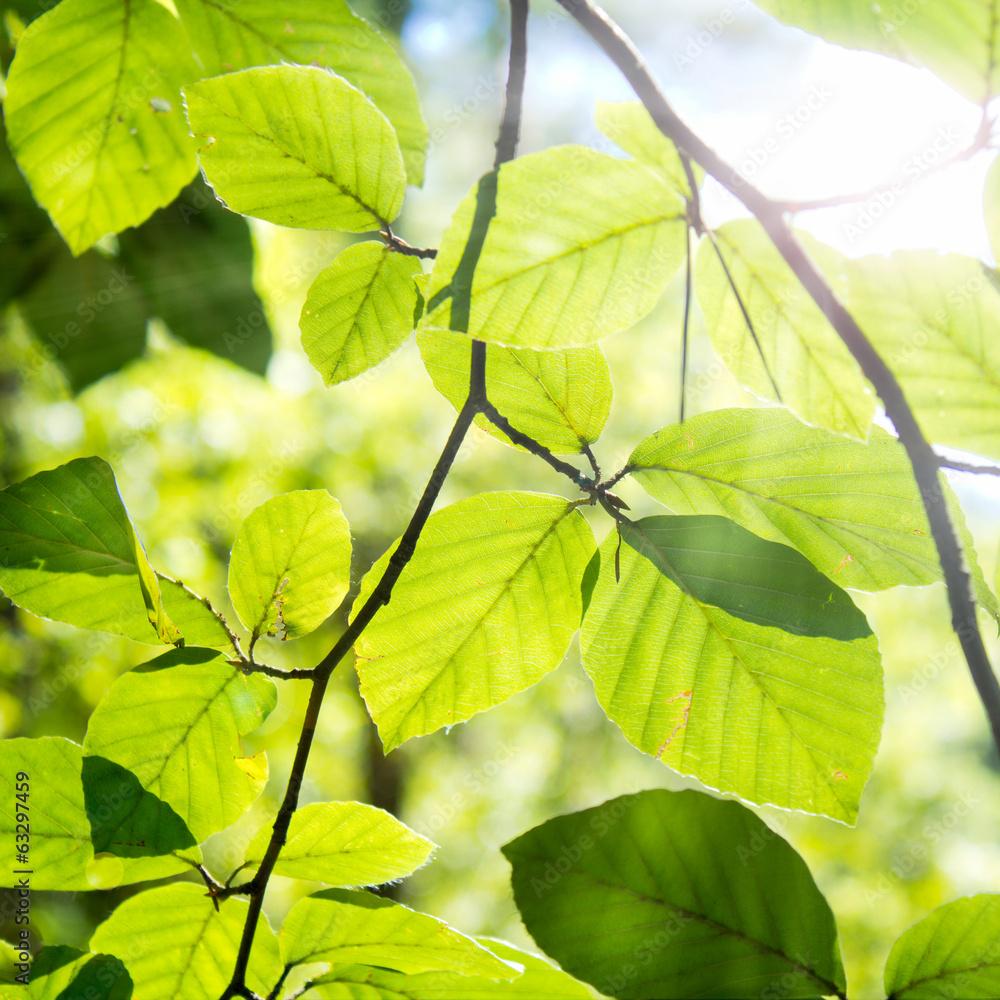 Fototapeta Sonniger Wald