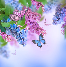 Branch Of Lilac Blue And Pink ...
